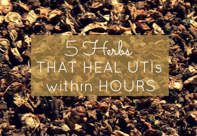 DIY Tea remedy made from herbs to heal UTI symptoms