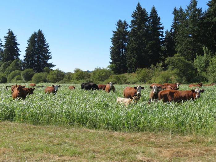 pasturedBeefdeckfamilyfarm.jpg