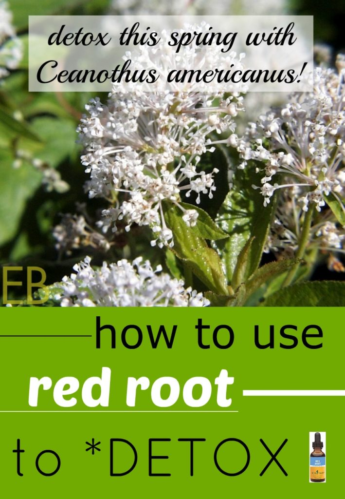 How to Use Red Root to Detox