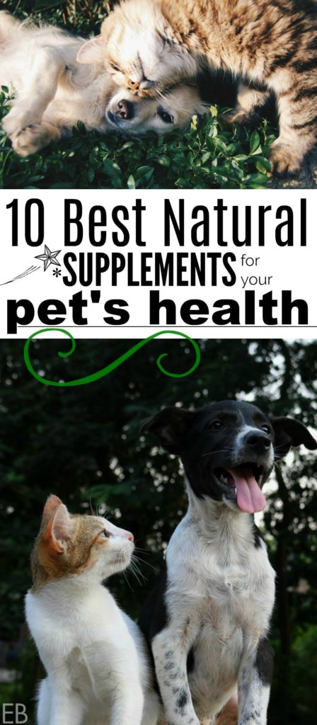 10 Best Natural Supplements for your Pet's Health #pethealth #petsupplements #petfood #petholistic