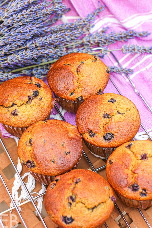 overhead view of six cooling paleo blueberry-banana high protein muffins