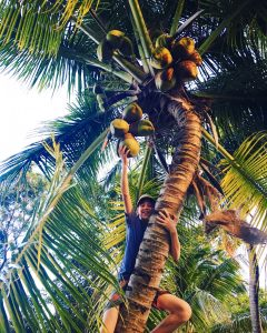 boy climbing coconut palm tree