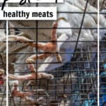 chickens in cages with words: Where to Buy Pastured Healthy Meats