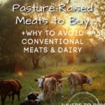 cows standing in field with healthy meats to buy title overlayment